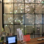 一足早い春 桜満開 リラックスした空間で歯科治療